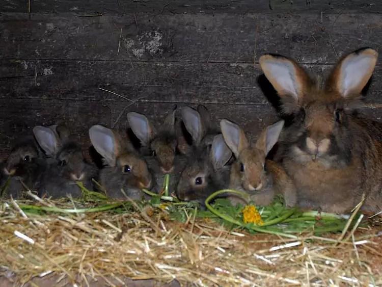 famille lapin par Sylviane NATOLI sur LInternaute