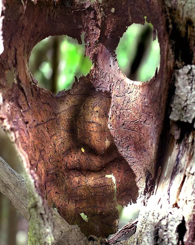 monstre des bois par pascal brocard sur l internaute