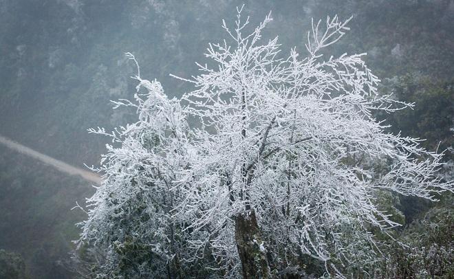 Rét khủng khiếp, cây cối hóa đá trên đỉnh Mù Cang Chải - 9