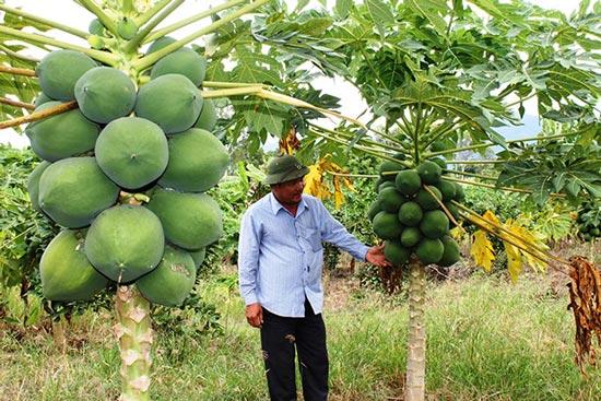 Làm giàu ở nông thôn: Trang trại tổng hợp, nuôi con, trồng cây gì cũng lãi khá - 1