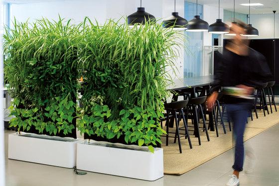 MOVING HEDGE  Separacin de ambientes de Greenworks