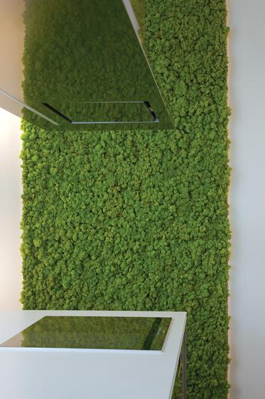 MOSS WALL  Pareti vegetali Verde Profilo  Architonic