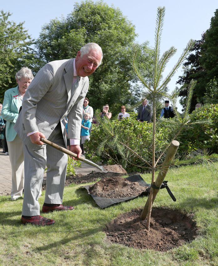 Charles planting a tree