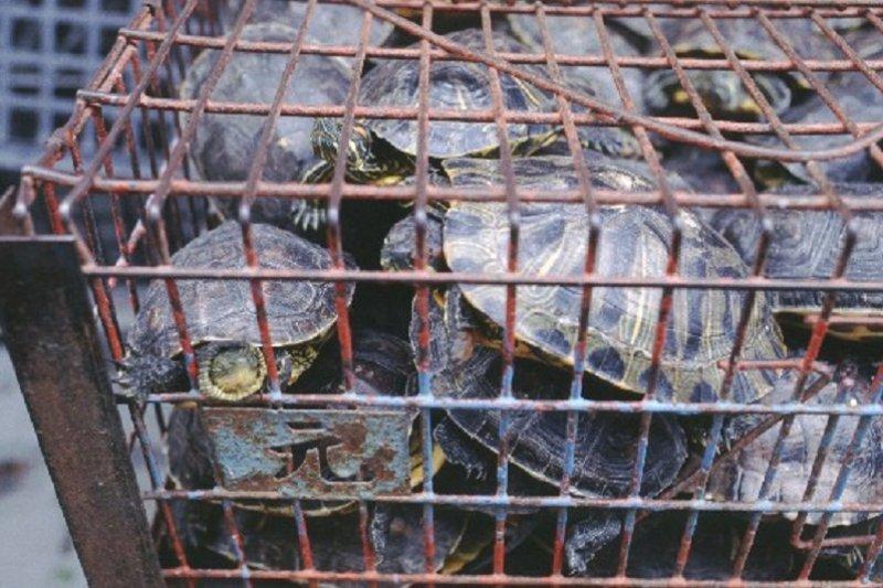 亂放生破壞環境 海濤法師信徒遭英國判賠115萬-風傳媒