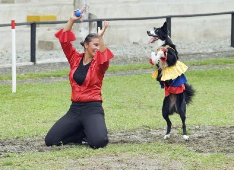 freestyle-canino