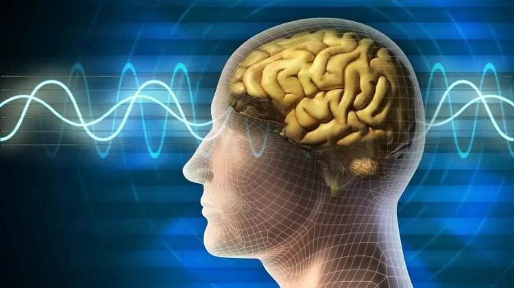 Beyin kelimeleri nasıl organize ediyor?