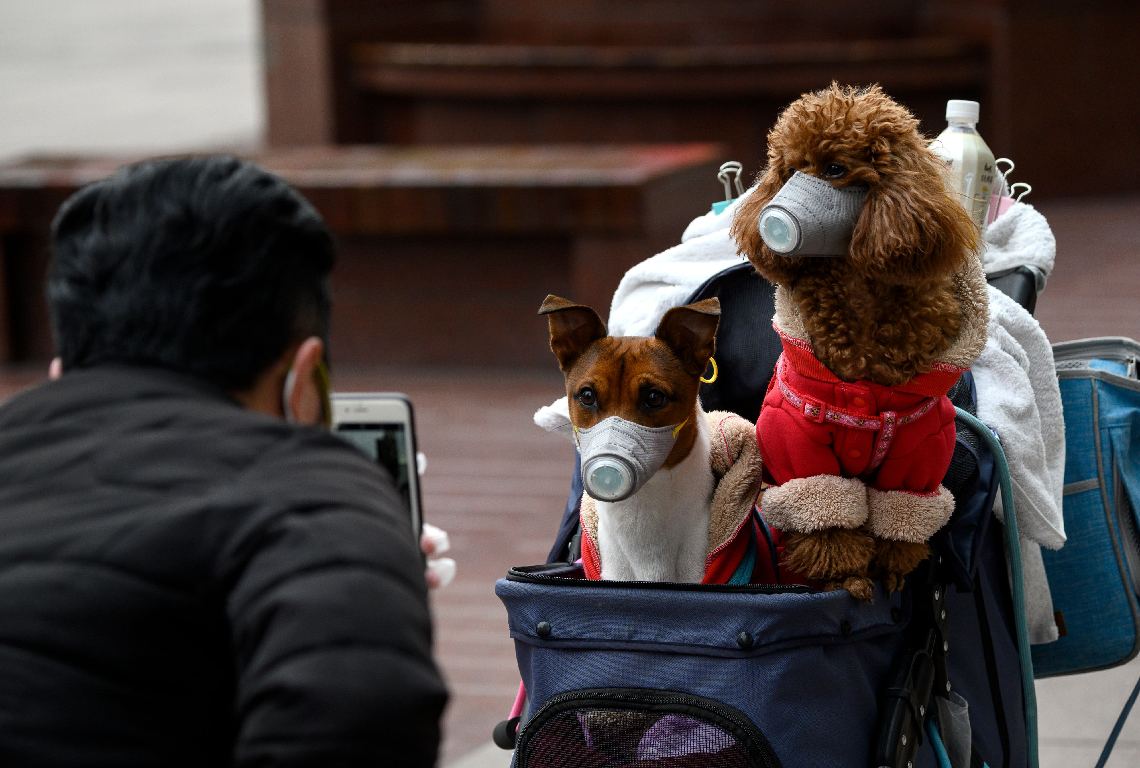 A dog in Hong Kong tests positive for the coronavirus, WHO confirms