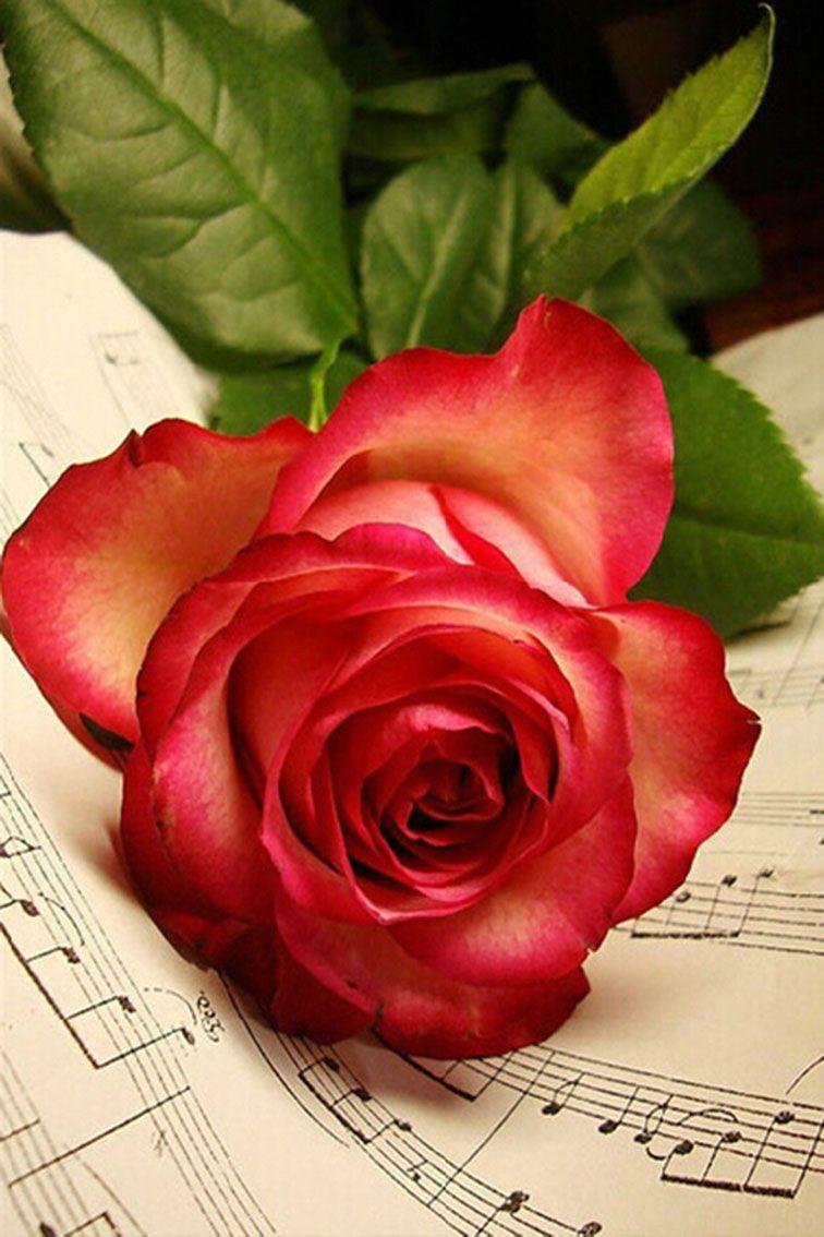 2019 5d DIY Diamond Painting A Beautiful Red Roses Art