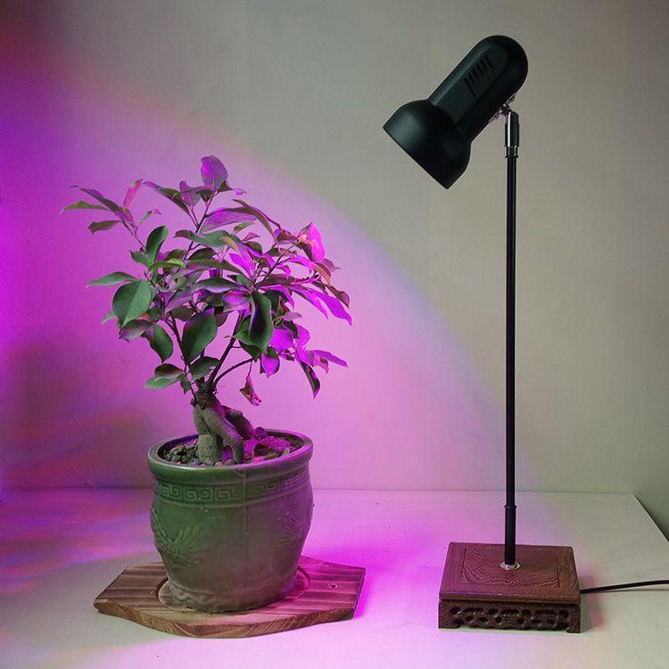 Full Spectrum Light Bulbs Plants