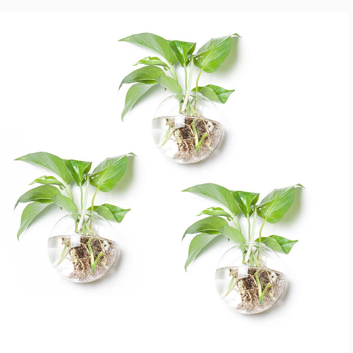 Plants Grow Water Vases
