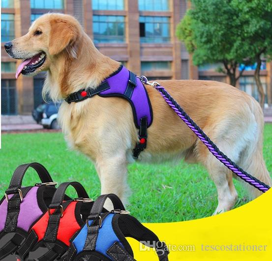 a harnesses style dog