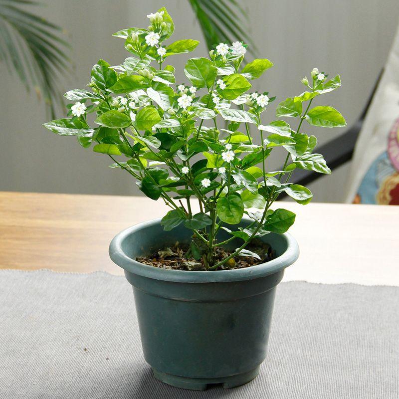 Best Small Indoor Flowers Seeds Potting Balcony Beauty