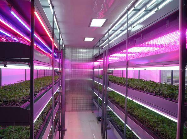 Uv Light Plants