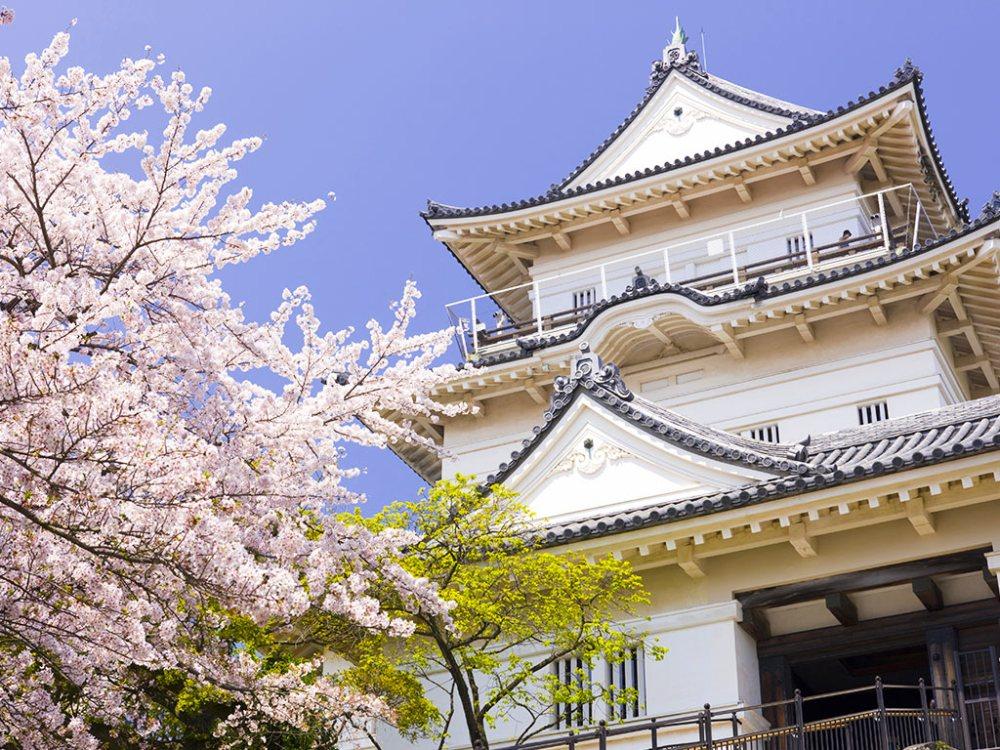 加上粉櫻點綴,小田原城址公園的春景更添大和風采。