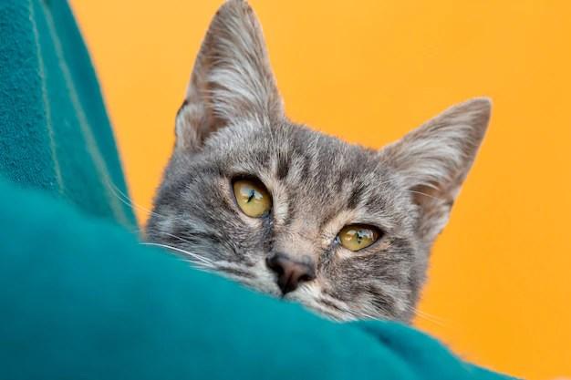 Close-up gato sentado en brazos del propietario Foto gratis