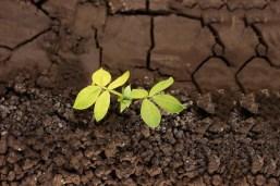 Planta de cultivo en la tierra Foto Premium