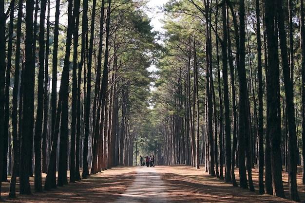 Bosco alberi foresta illuminato dalla luce del sole dorato