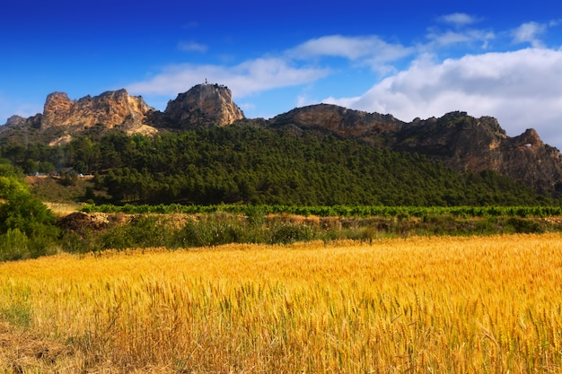 Paesaggio rurale  Scaricare foto gratis