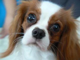 Piccolo cane. k9   Foto Gratis