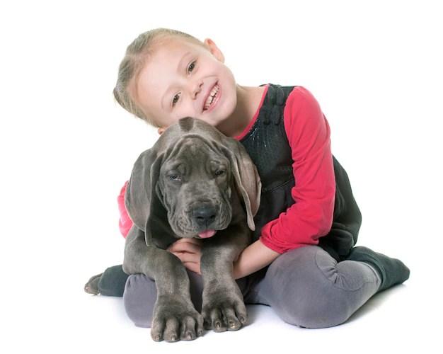 Criança abraçando Dogue Alemão filhote