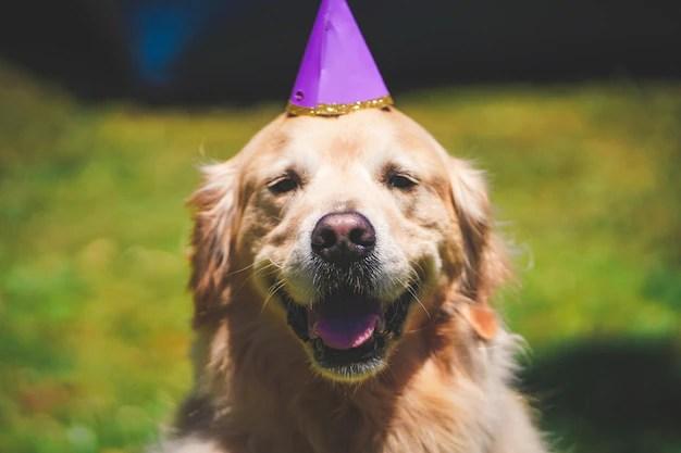 As 10 raças de cachorro mais populares no Brasil