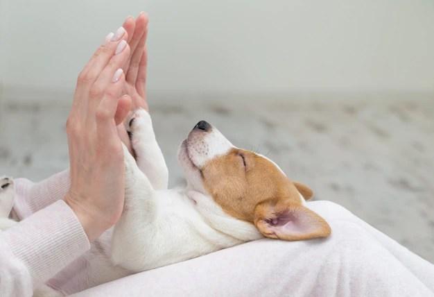 Cachorro sonha com palmas das mão do dono