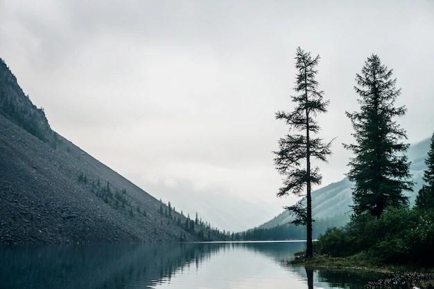 Hi/low, realfeel®, precip, radar, & Premium Photo Conifer Trees On Shore Of Mountain Lake In Rainy Weather