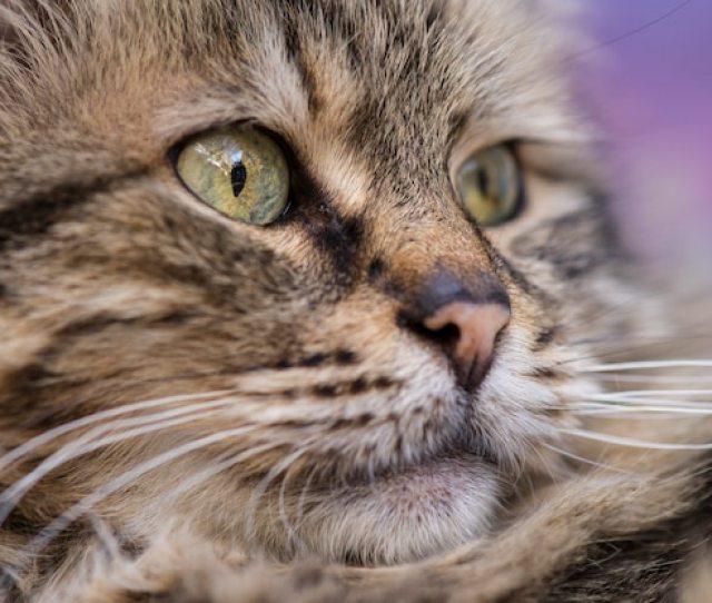 Cute Cat Picture Free Photo