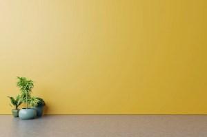 empty background wall yellow floor plants wooden mockup premium