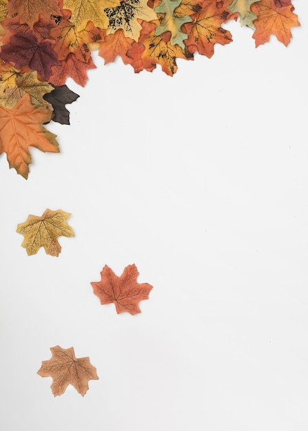 Fall Leaves Wallpaper Border Flat Lay Of Autumn Maple Leaves Falling Down Photo Free
