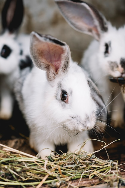 portrait of cute rabbit
