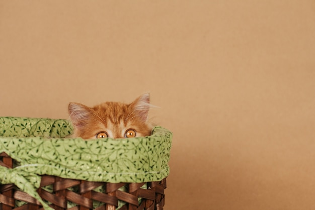 A small fluffy ginger kitten peeks out of a wicker basket. the kitten is hiding. Premium Photo