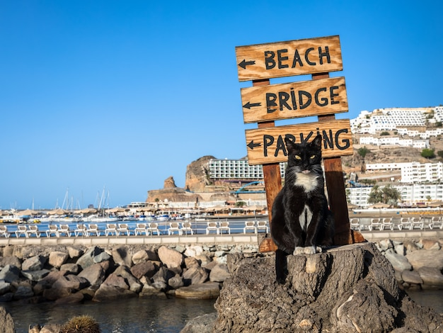 A stray cat posing on a tree stump in front of a sign pointing at the beach in puerto rico, gran canaria in spain Premium Photo