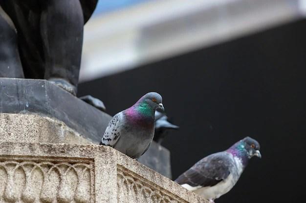 Två duvor vid en staty