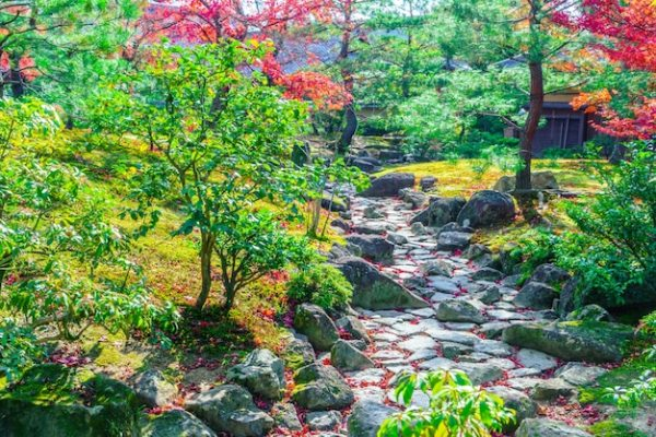 vibrant forest landscape fall beauty