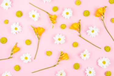 Free Photo White and yellow flowers on pink background