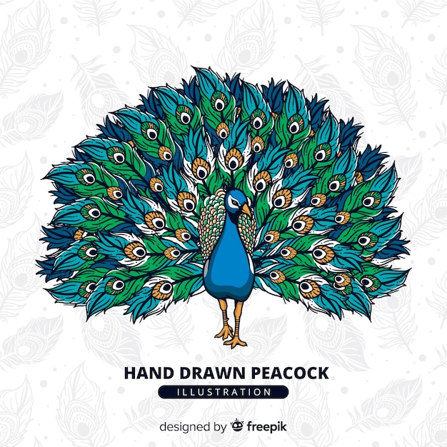 Peacock Vectors. Photos and PSD files   Free Download