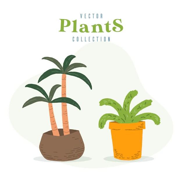 Premium Vector Big Indoor Plants
