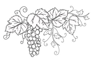 Premium Vector Bunch of grapes with leaves black outline on an isolated white background vine