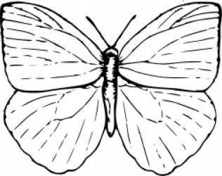 Free Vector Butterfly outline