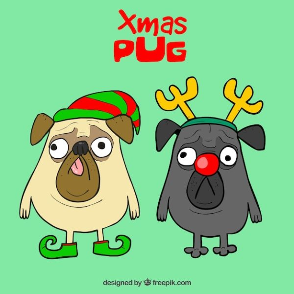 funny pugs with christmas costumes