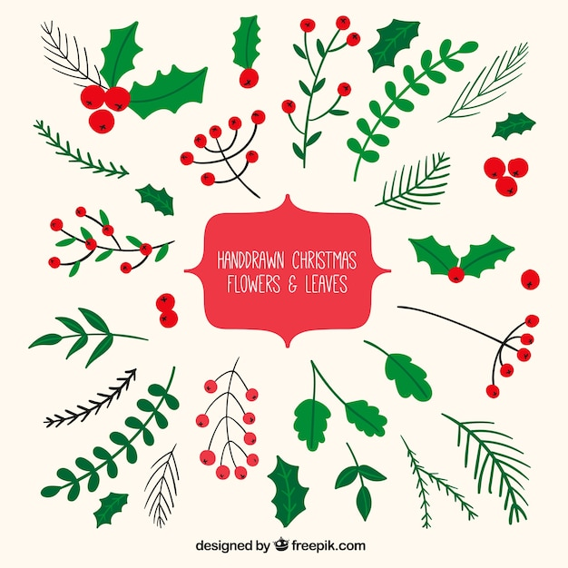 Mistletoe Vectors Photos And PSD Files Free Download