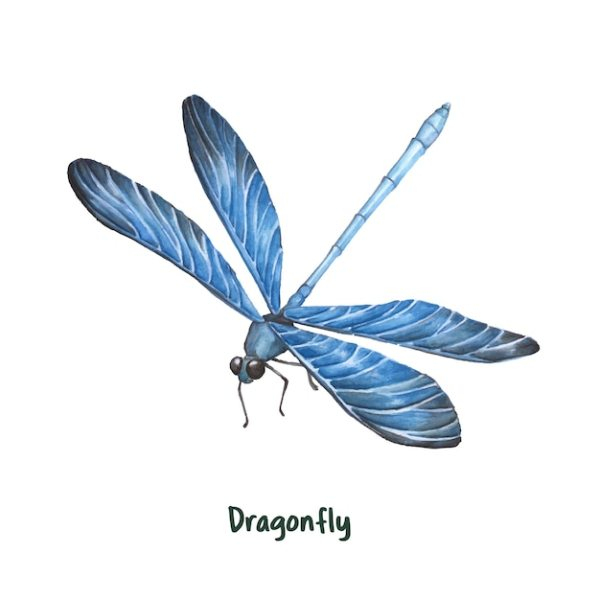dragonfly vectors and psd