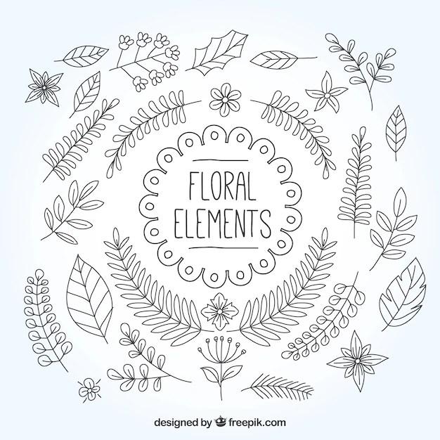 Hand Drawn Natural Ornaments Vector