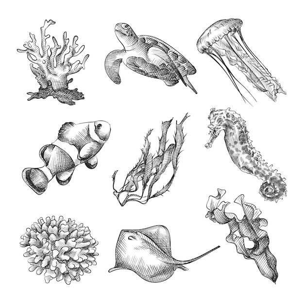 Premium Vector Hand Drawn Sketch Set Of Sea Animals And Sea Plants Set Includes Corals Turtle Jellyfish Nemo Fish Algae Seahorse Stingray