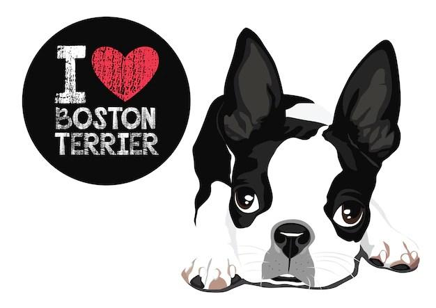 Download Premium Vector | I love boston terrier vector