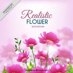 Pink Flower Free Vector Graphics Everypixel