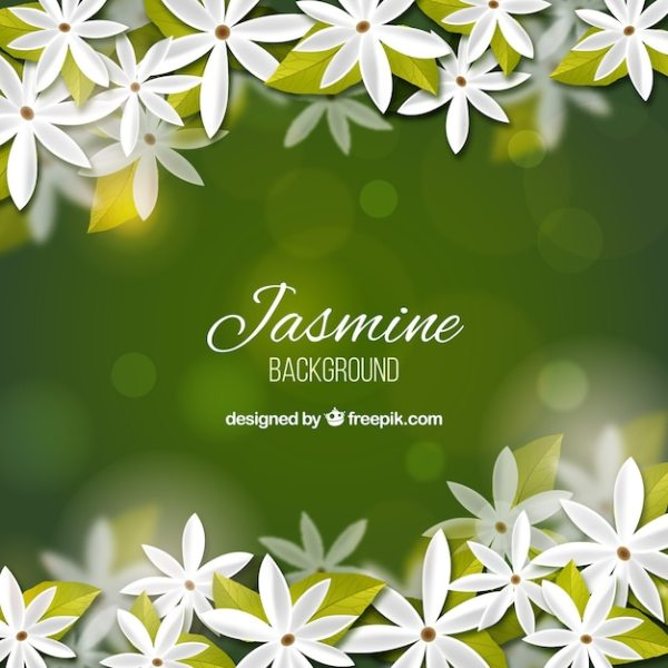 Jasmine Vectors Photos and PSD files Free Download