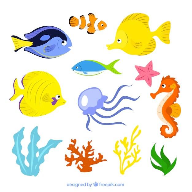 Sea life illustration   Free Vector