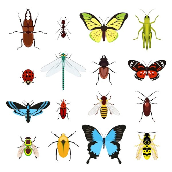 insect vectors and psd
